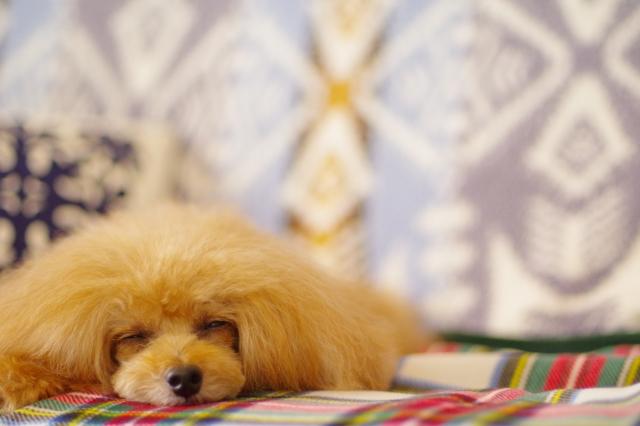 寝ている犬の画像